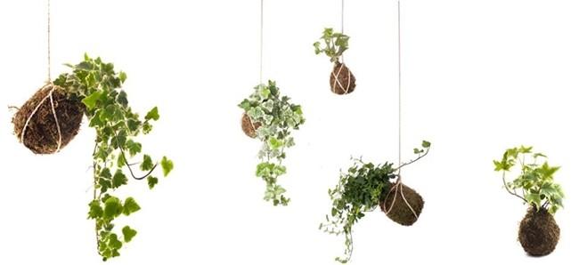 kokedamas, plantas, decoración, jardín
